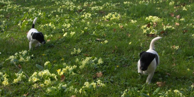 Fillis and Fleck in the flowers.